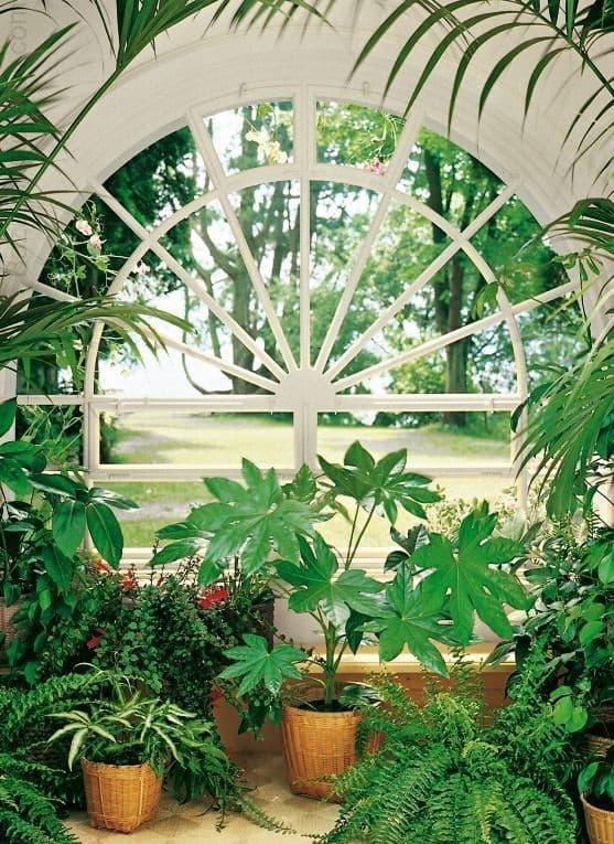 может зимний сад фотообои нижний новгород настоящее